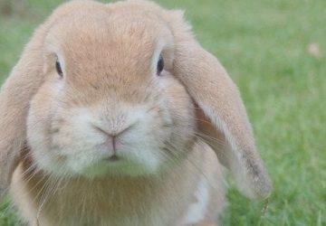 Conigli per gli aqquisti - Pareri e Pensieri