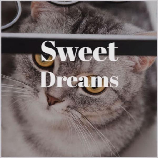Lamberto Salucco Sweet Dreams